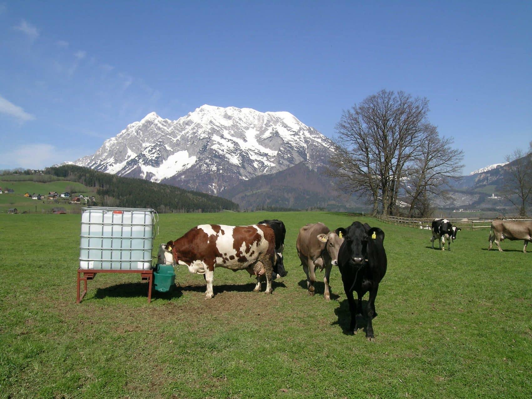 180 vaques per produir llet fresca